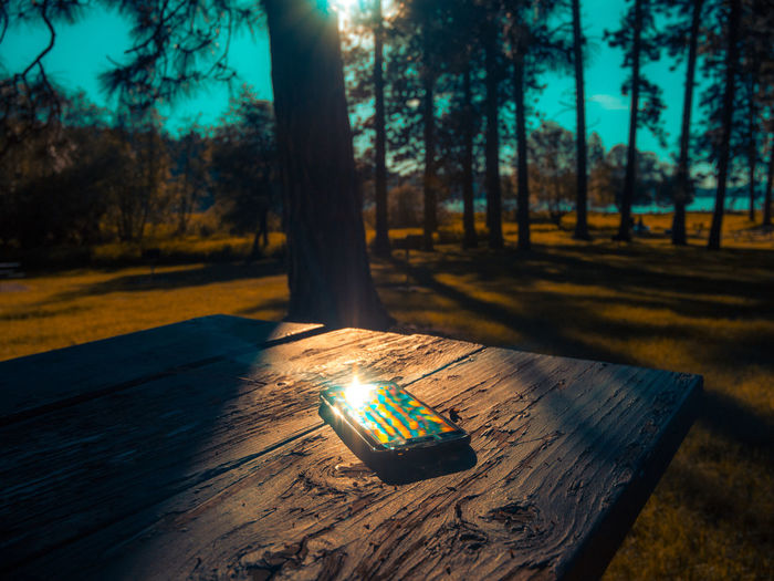 Rainbow phone. Playing with sun light. Samsung galaxy s7 edge. Tree Shadow Wood - Material Forest Sunlight Outdoors Illuminated Nature Sky Beautiful Cinematic Naturephotography Summer Washington Lake Plant Movielook Colorgrading Sigma 18-35 F1.8 Samsung GalaxyS7Edge Android Movielook