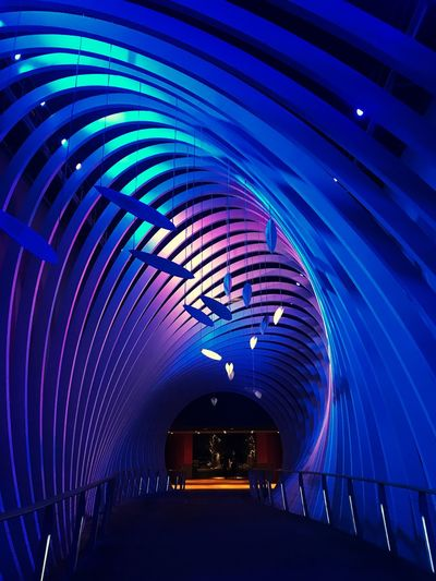 Flying fish? Nova Eventis Flying Fish? Taking Photos Getting Inspired Curves And Lines Illuminated Arch Tunnel The Way Forward Built Structure Night Pattern Architecture Indoors  Modern Covered Bridge Blue Neon No People City EyeEmNewHere EyeEmNewHere