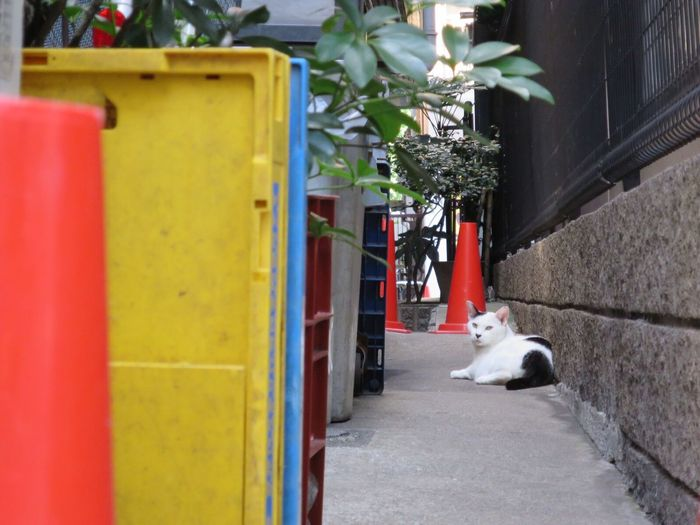 Day Stray Cat One Animal Domestic Animals Street No People Cat Watching Cat Domestic Cat Cat Lovers