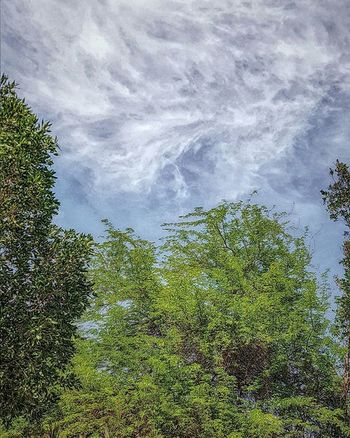 Samsung Galaxy S7 Galaxys7 Nature Landscape Spring Sky Clouds Tree Basrah Iraq Mix