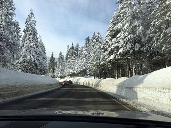 Winter Wonderland ❄ South Lake Tahoe Trees Covered With Snow Road Cold Temperature Mode Of Transport Taken While Driving