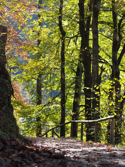 Beauty In Nature Branch Day Forest Growth Leaf Nature No People Outdoors Scenics Sunlight Tranquility Tree Tree Trunk
