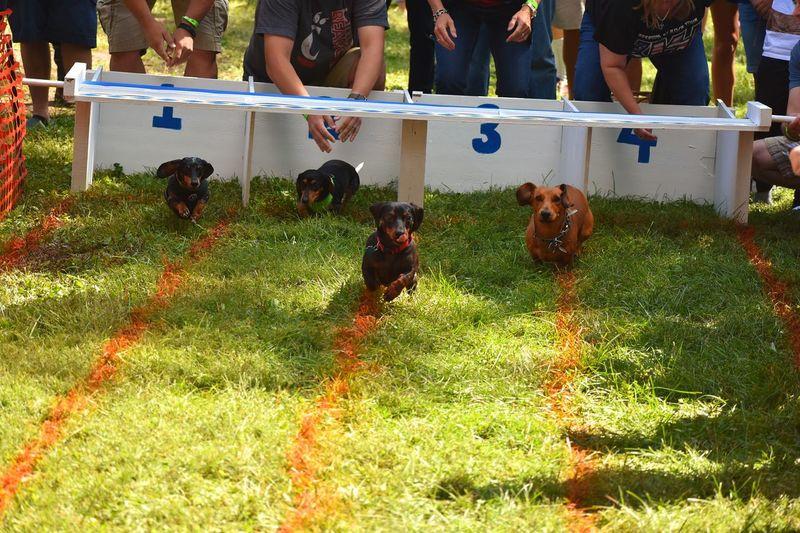 Animals Dog Race Octoberfest Dog Weiner-Dog