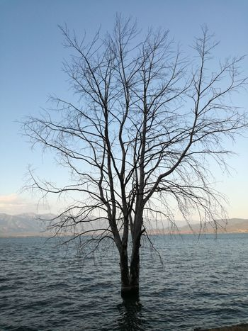 Tree Sky Nature Scenics - Nature Bare Tree Water No People Tranquil Scene Outdoors