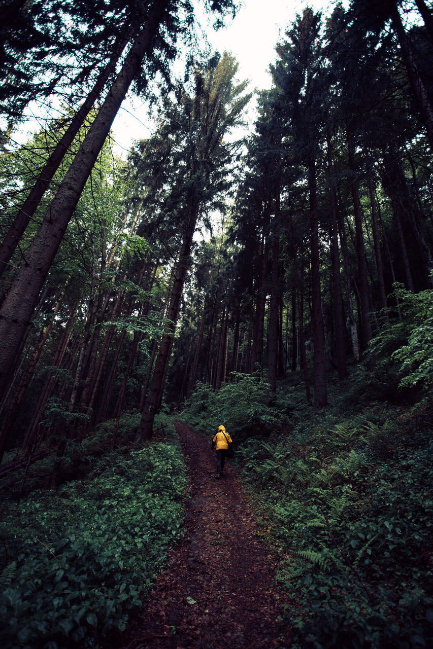 Rear View Of Child Walking On Footpath Amidst Trees At Forest