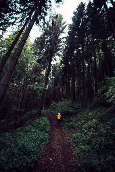 Adventure Adventures Day Exploring Forest Forest Photography Full Length Growth Hiking Landscape Nature Nature Nature Photography Nature_collection Naturelovers One Person Outdoors People Real People Trail Tranquility Tree Tree Tree Trunk Walking Lost In The Landscape