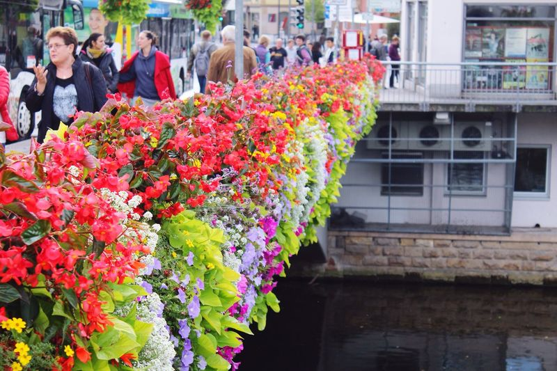 Flower Freshness Multi Colored City Life Focus On Foreground Footpath German Tübingen EyeEm Best Shots Blossom Riverwalk Europe Germany Adventure Awaits Discover Your City Discover Your World Travel Traveling