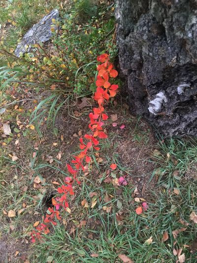 Autumn🍁🍁🍁 Autumn Colors Autumn Collection Autumn Leaves Autumn Growth Plant Flower Fragility High Angle View Nature Leaf Botany Beauty In Nature Freshness Field In Bloom Tranquility Blossom Springtime Wildflower Uncultivated Day Outdoors Vibrant Color