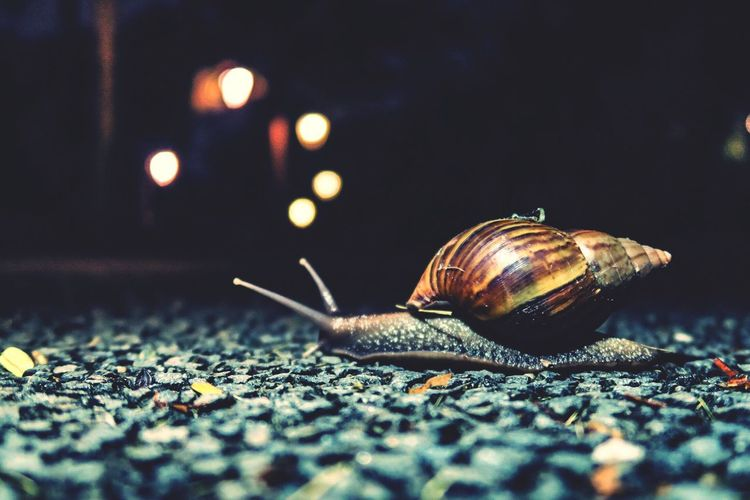 Close-Up Of Snail During Night