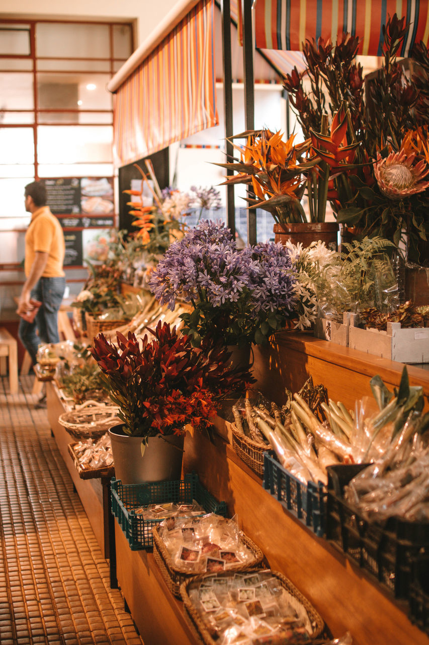 VIEW OF POTTED PLANTS AT STORE
