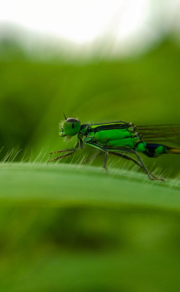 Insect Animals In The Wild Animal Wildlife One Animal Animal Themes Day Nature Outdoors No People Close-up The Great Outdoors - 2017 EyeEm Awards EyeEm Best Shots Live For The Story The Street Photographer - 2017 EyeEm Awards WeekOnEyeEm Animals In The Wild