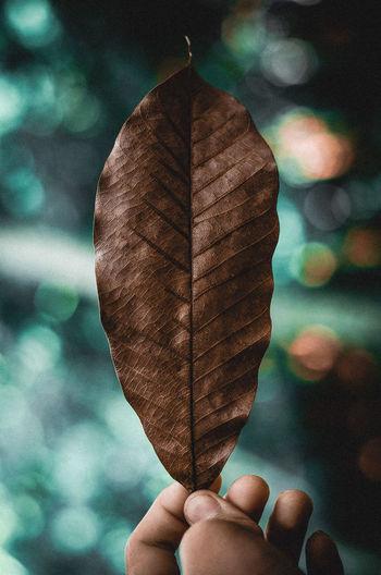 Leaf Holding
