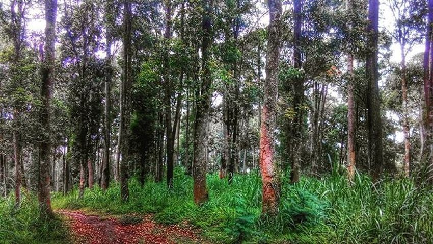 Hutan jayagiri.... gunung putri lembang Trekking Explorebandungbarat Bandungbarat Explorebandung Dheayodiansyah