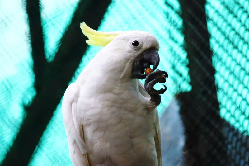 Let me finish my snack Animal Themes Animal One Animal Animal Wildlife Vertebrate Animals In The Wild Parrot Bird Focus On Foreground Close-up No People Eating