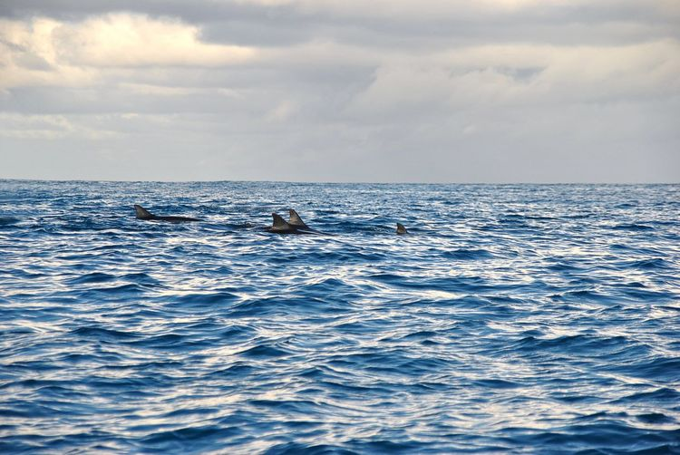 Dolphins in the