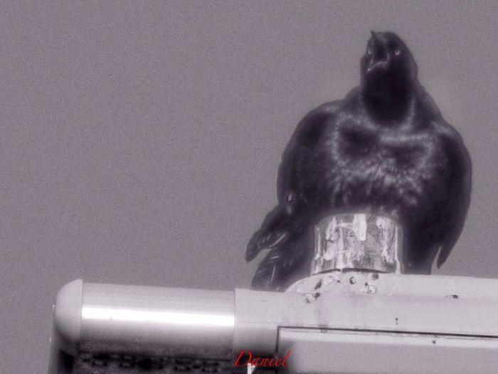 TheVille Bird Photography Black & White Theville #blackandwhite #art #Takingphotos