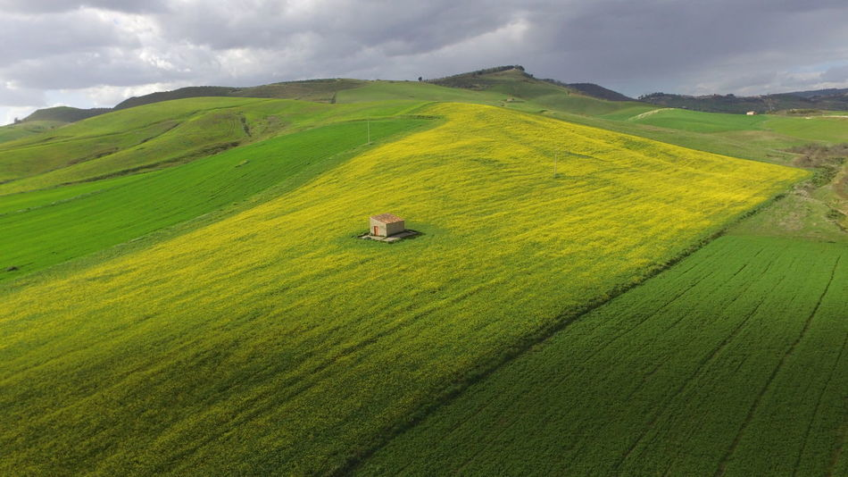 Tea Crop Tree Terraced Field City Irrigation Equipment Cereal Plant Rural Scene Agriculture Beauty Hill