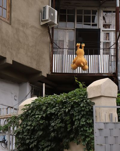 Low Angle View Of Stuffed Toy Hanging By Building