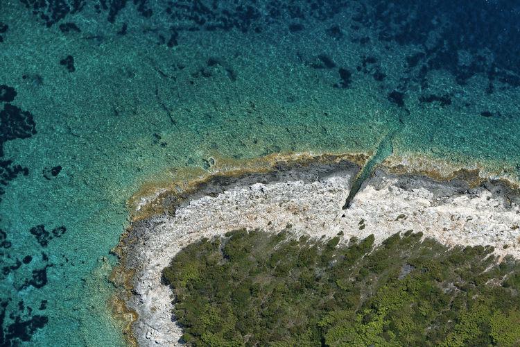 High angle view of an animal on beach