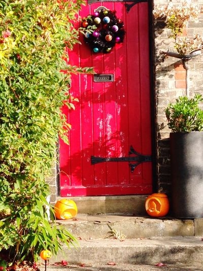 Happy Halloween/Christmas 🙄 Red Door Outdoors Green Color Growth Tree Plant No People Day Leaf Nature Ivy Ajar