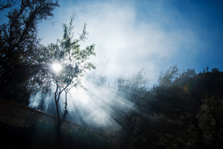Sunlight streaming through trees in forest against sky