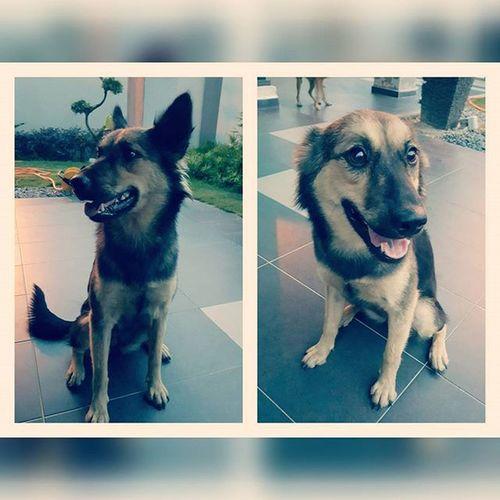 我是最帅的狗 im the best looking dog 下一秒 next second 什么?你说有食物?Did you just said food? Dog Puppy LOL Stupidgreedydog