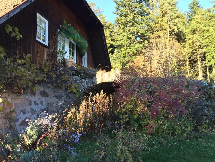 Schwarzwald Haus Black Forest Black Forest House Autumn Colors Old House Natural Beauty Sulzbach Baden-Württemberg  Germany Flowers,Plants & Garden