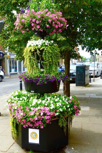 Leighton Buzzard Anglia In Bloom Planters Flowers,Plants & Garden