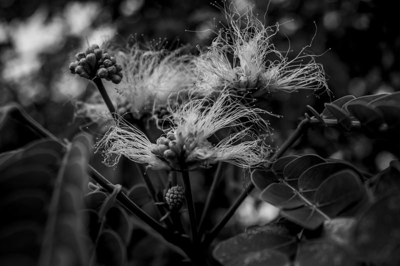 black is beautiful Beauty In Nature Day Flower Head Focus On Foreground Fragility Nature No People Outdoors Plant Blackandwhite Monochrome Dark Matters