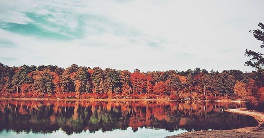 Throw back to the fall colors. --- Barnstable, MA. VSCO Vscocam Bestofvsco Snapseed Nature Lake Pond Beach Trees Fall Fallcolors Sky Clouds Bluesky Reflection Capecod Capecodimages Capecodinstagram Capecodinsta Newengland Massachussets Má Home Travel Vacation explore