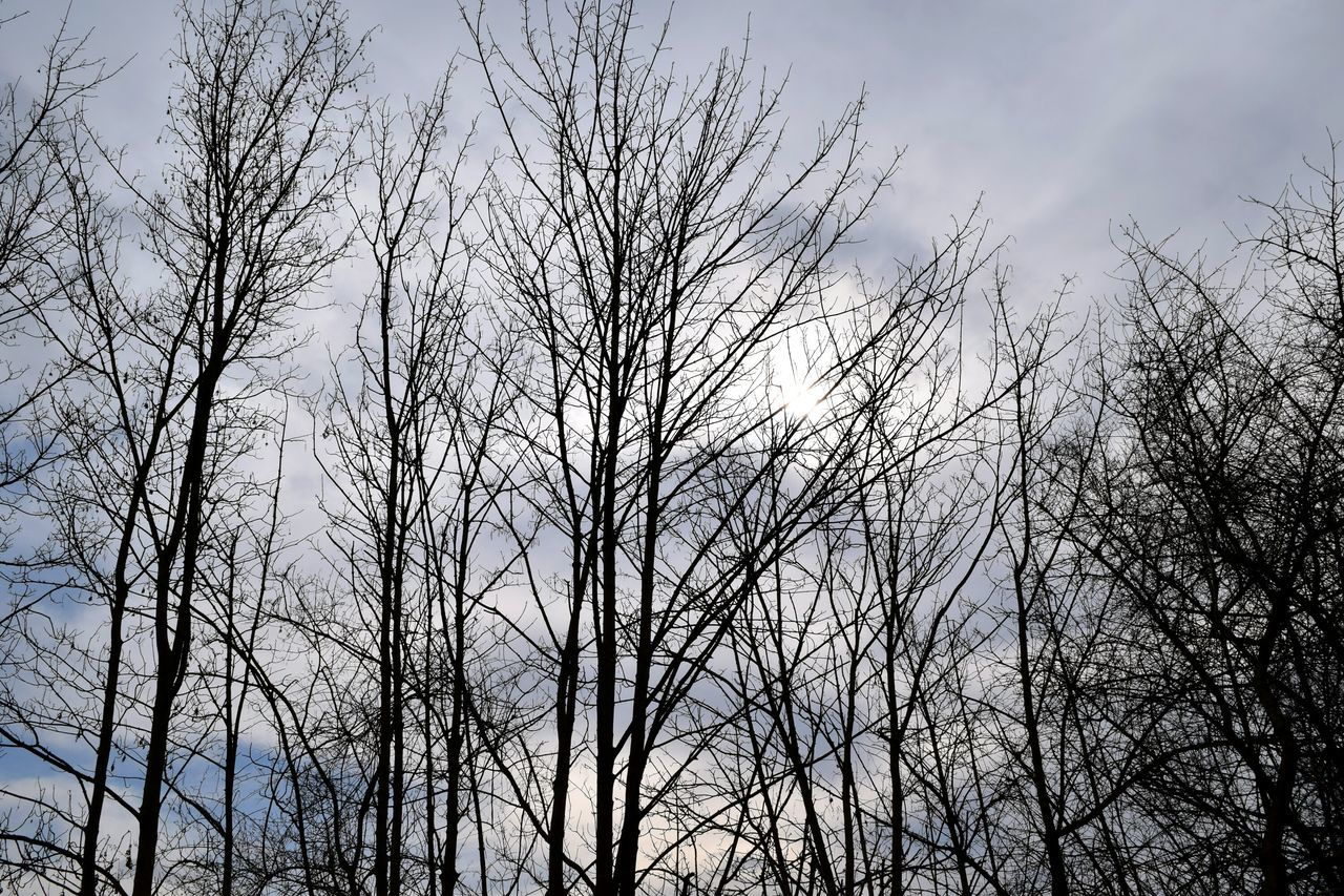 nature, low angle view, bare tree, tree, no people, day, sky, beauty in nature, outdoors, tranquility, branch, growth, forest