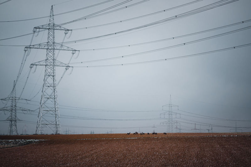 Low angle view of electricity pylon on field with wild deer against sky