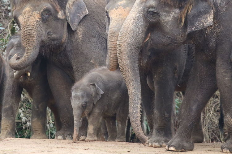 Animal Animal Family Animal Themes Animal Wildlife Animals In The Wild Asian Elephant Bonding Care Day Elephant Elephant Calf Indian Elephant Mammal Nature No People Outdoors Three Animals Togetherness Young Animal