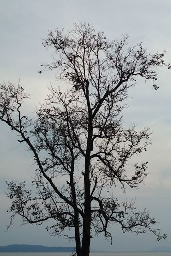 The tree Sky Plant Tree Low Angle View Branch No People Nature Beauty In Nature Growth Tranquility Day Bird Outdoors Silhouette Clear Sky Animals In The Wild Vertebrate Scenics - Nature Tranquil Scene Animal Wildlife