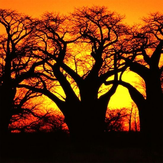 Paint The Town Yellow Tree Sunset Atmospheric Mood Tree Trunk No People Branch Beauty In Nature Sky Nature