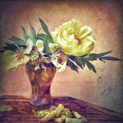 NEM Submissions WeAreJuxt.com EyeEm Best Shots EyeEm Best Shots - Flowers