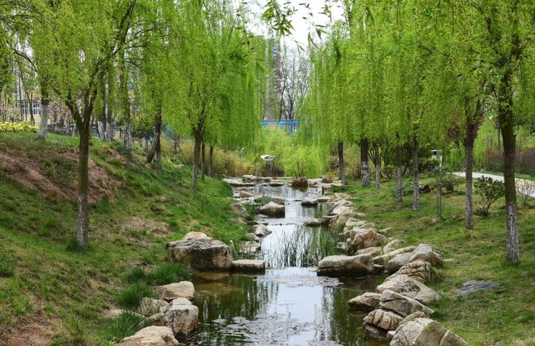 Tree Water Nature Outdoors Day Beauty In Nature Growth Tranquility River Tranquil Scene Green Color The Way Forward No People Scenics Branch Sky