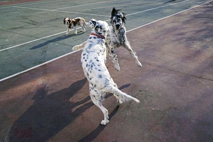 High angle view of dog playing