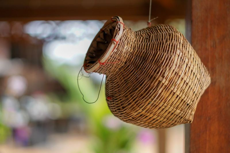 Basket of Thai Identity Focus On Foreground Close-up Animal Insect Animal Themes Animals In The Wild One Animal Hanging Animal Wing Vertebrate Beauty In Nature Invertebrate