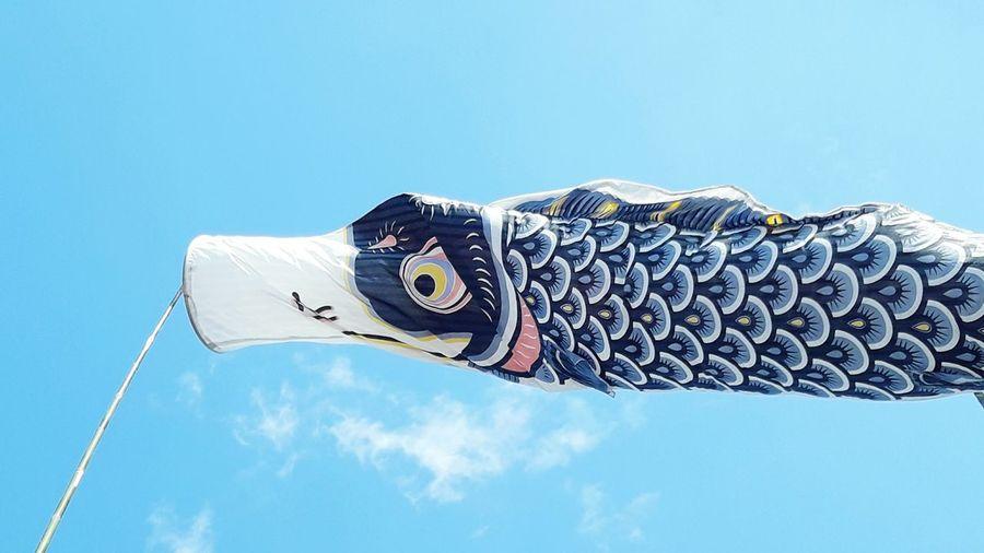 Japan Fish sky