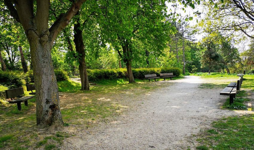 Benches Empty Tranquil Scene Calm And Relax Green Park - Man Made Space Green Colour Tree Grass Walkway Tree Trunk Woods Grassland