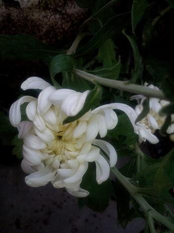 Season  Flower Blooming Close-up