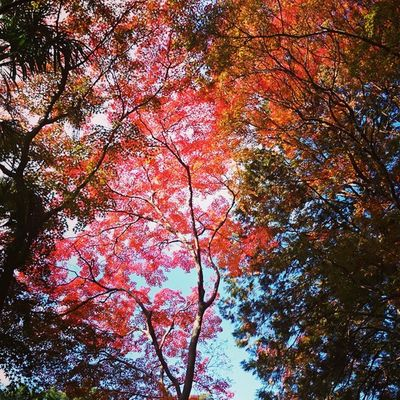 Fall in Kyoto Fall Kyoto Jizo-in Leaves Temple Nature