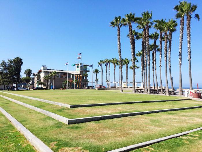 California Love Lines Palm Trees Beach Summer