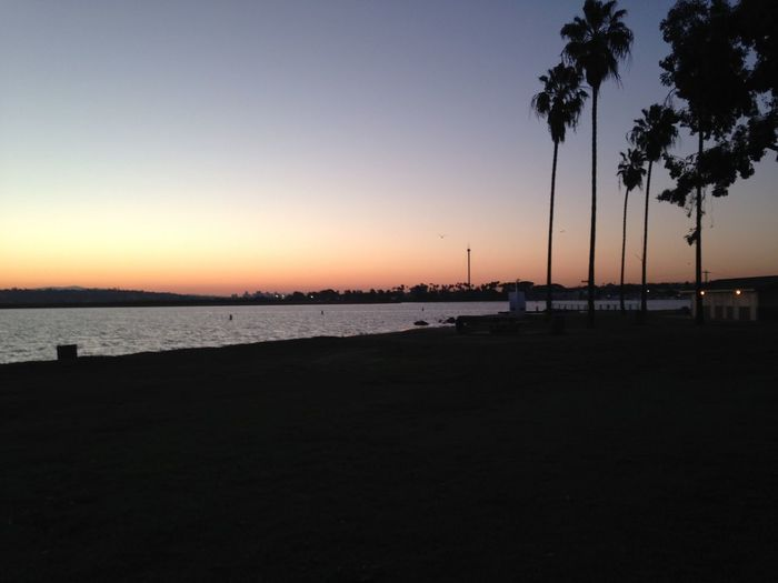 Mission Bay Mornings Sunrise San Diego California 6am Early Morning Palm Trees Early Bird Sun Sand Shadow San Diego Bay Coffee On The Beach Summer Summer Mornings Summer Mornings On The Beach Love Water Lover Beach Bum Simplicity Hang It On Your Wall California Love