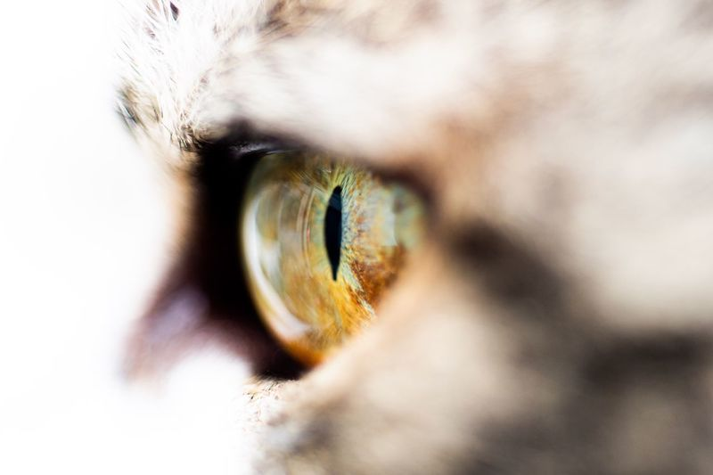Extreme close-up of a cat
