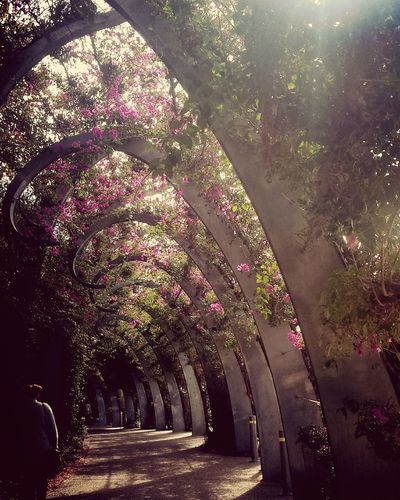 If we're facing in the right direction, all we have to do is keep walking. Enjoying Life Feeling Philosophical Tunnel Of Flowers...