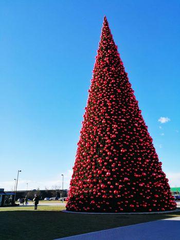 Christmas Christmas Decoration Celebration Outdoors Christmas Ornament Christmas Tree Scenics Pine Woodland