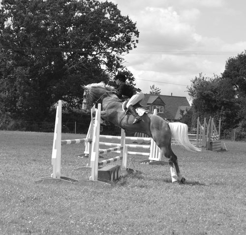 Equine Photography Equine Blackandwhite Photography Black And White Farming Showjumping Jump Countryside Countryshow