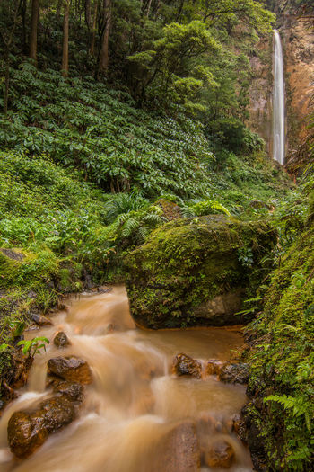 Azores Azores Islands Sao Miguel Sao Miguel- Azores Portugal Islands Sea Jungle Water Waterfall Vulcanic Landscape Long Exposure Travel Hiking Spring Plants Forest Hills Mountains Beauty In Nature Idyllic Calm Green Nature Moody Sky Leaves Environment Land Outdoors